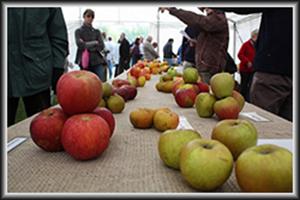 Applefest Programme
